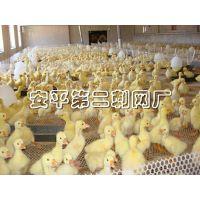 塑料平网 养殖网 养鸡网