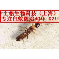 正规上海灭白蚁 西餐厅消灭白蚂蚁 蚂蚁防治方法
