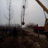 绿化工程 锦州绿美园林绿化工程有限公司
