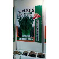 供应河北时丰农业科技开发有限公司蔬菜种子四季小葱