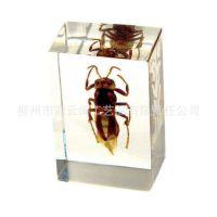 生产批发 昆虫琥珀书镇/纸镇 景区旅游纪念品 树脂工艺品人造琥珀