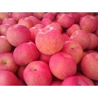 山东供应冷库红富士苹果价格降价了