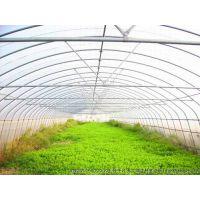 优质蔬菜大棚管批发 13920286607