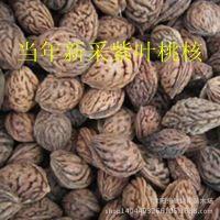批发直销紫叶桃桃核 毛桃种子 当年新采 推荐产品