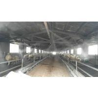 夏季养羊场棚舍降温、消毒、除臭设备