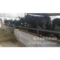 河北唐山肉驴养殖场