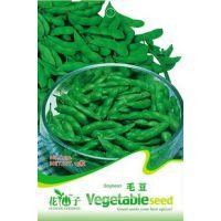 蔬菜种子 毛豆种子  黄豆 枝豆 豆荚嫩绿色 扁豆  20粒/包