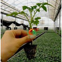 宣化区西红柿苗|安信种苗(图)|西红柿苗厂家