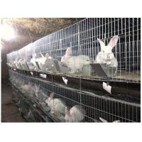 重 40斤 长2米高60公分宽1.5米大空间 加粗加密子母兔笼 手工笼