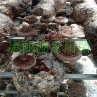 出口韩国、菲律宾香菇菌棒