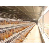 【热销低价现货蛋鸡笼子】广州诚信畜牧 阶梯式防锈铁丝网鸡笼|包全套配件