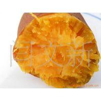 ***适合电烤的品种河北红薯遗字138地瓜红薯