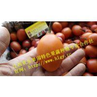 江西欢乐果园2016新上市鲜果树蛋果口味正欢迎品尝(现货供应)