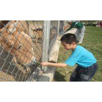 养殖用护栏网@贵州供应家禽养殖场护栏网规格产品@专业生产养殖铁丝网