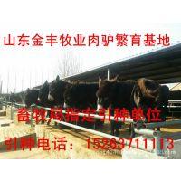肉驴品种肉驴改良技术养驴的饲料配方驴养殖场建设