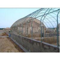 温室大棚养殖甲鱼需要注意什么?