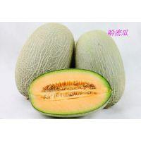 【京城果园】新鲜水果--长香玉哈密瓜(5斤左右/个)北京包邮