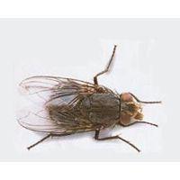 寿光灭鼠灭蟑螂蟑螂药鼠药专业公司