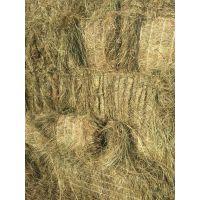 2016优质隆泰牌东北羊草,苜蓿草,草捆颗粒草段,牛马羊鹿兔