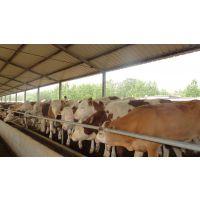 大量农村养殖杜泊绵羊、小尾寒羊、波尔山羊成本小,市场行情稳定