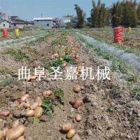 吉林小型地瓜收获机 无破损土豆挖掘机厂家直销