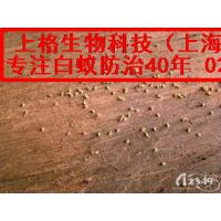 白蚁预防工程费|治白蚁用什么药|杀白蚂蚁
