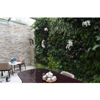荆州植物墙、武汉植物墙公司、植物墙智能种植系统