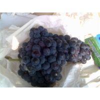 云南宾川夏黑葡萄上市夏黑葡萄建业果业供应