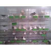 安平县加工定做动物饲养笼 肉鸽笼 商品笼 笼具用品