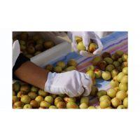 百果王鲜冬枣七月中旬正式上市!咨询冬枣价格。