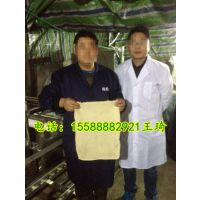 山东仿手工豆腐皮机,大型豆腐皮机器,豆腐皮加工设备