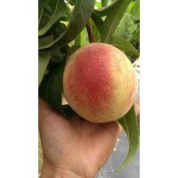 哪里有卖桃树苗的|桃树苗产地在哪里|哪里出售桃树苗