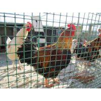 生态林下养鸡用养殖围网@广西大片农场围鸡用哪种养鸡围网