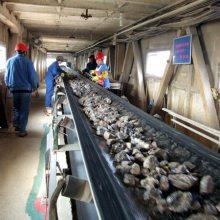 移动爬坡输送机 煤炭装车输送机型号A5报价