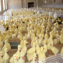 阻燃养殖网 塑料围网 养蚕网厂家