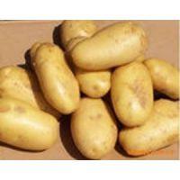 供应河北时丰农业科技开发有限公司蔬菜种子土豆1号
