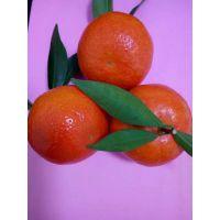当前综合性状相对优良的柑橘品种是什么?为什么越来越多人加入种植世纪红这个行业?常德基地