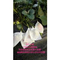 供应新概念牌草莓专用木浆纸袋