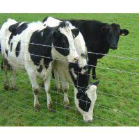 养殖基础建设之热镀锌牛羊围栏网
