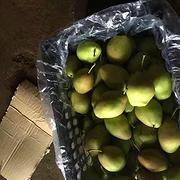 陕西香梨价格,红香酥梨价格,陕西冷库红香酥梨价格,2017冷库红香酥梨价格。