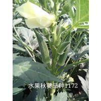 拜耳纽内姆水果秋葵新品种1172编号