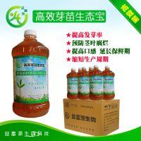 四川广东云南广州越秀活体芽苗菜益生菌有机营养液哪里有卖的家庭栽培技术
