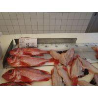 供应大西洋红鱼原料