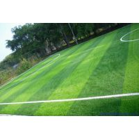 大连专业施工塑胶地面,学校操场,塑胶跑道,足球场等