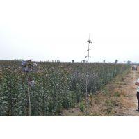北美海棠供应商通康园林