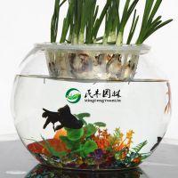 厂家直销 低底大口水晶透明玻璃水培花瓶  平口水培花瓶 鱼缸花瓶