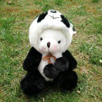 新款可爱坐姿国宝大熊猫毛绒玩具卡通变脸熊猫公仔礼品代理加盟