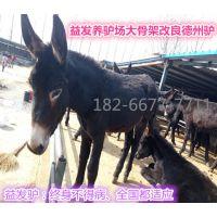 哪里有肉驴养殖场供应三粉驴肉驴价格