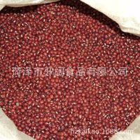 优质红小豆 纯天然食品 出口红豆 五谷杂粮 厂家专业供应【图】