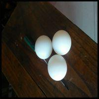 专业定做塑料尼龙球 POM实心球 耐磨 颜色种类齐全